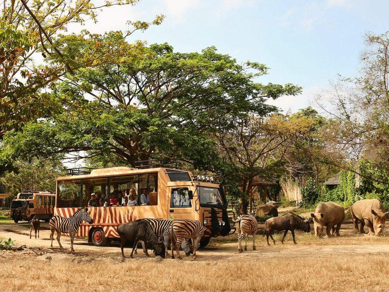 Rasakan Alam Liar Afrika Dalam Balutan Nuansa Budaya Bali Bersama Wandernesia