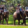 Elephant Safari Ride (2)