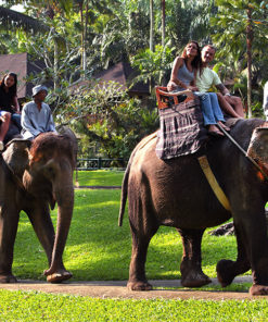 Elephant Safari Ride