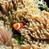 Menjangan Snorkeling (1)