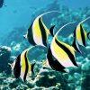 Menjangan Snorkeling (3)