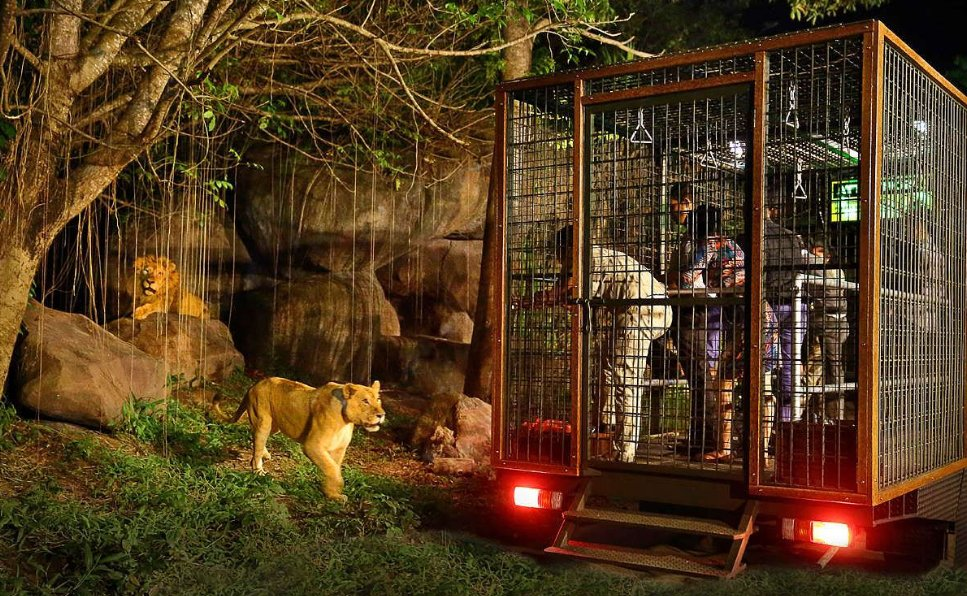 Visit Bali Safari and Marine Park things to do in bali at night