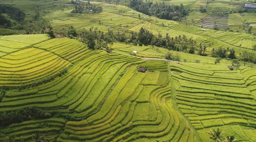 Rice Fields 10 best things to do in bali