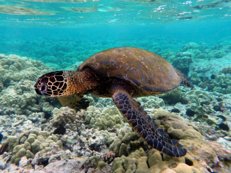 Turtle 10 best things to do in bali