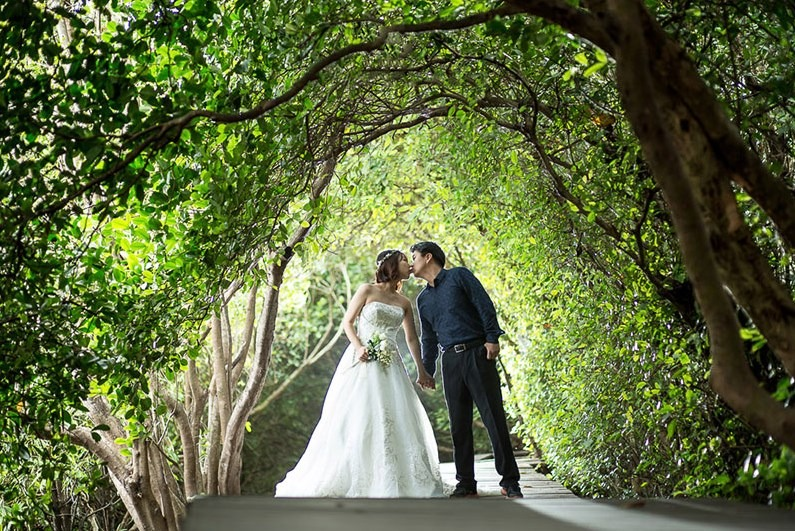 mangrove boardwalk