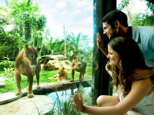 Bali Zoo Wandernesia