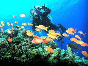 Padang Bay Dive