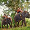 elephanttrekking5