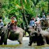 elephanttrekking9