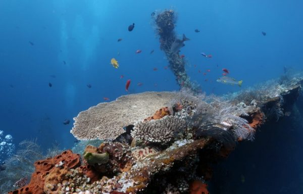 Coral Reef on Tulamben Wreck