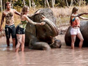 Elephant Mud Fun Experience (1)
