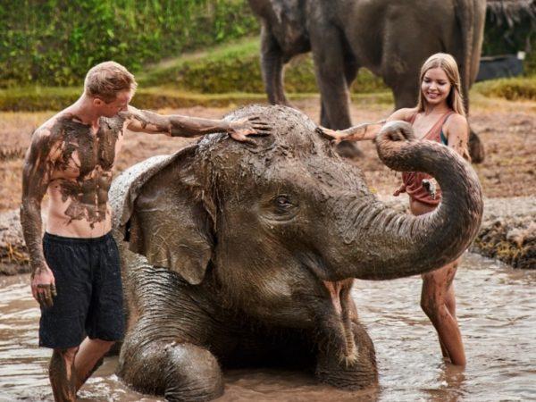 Elephant Mud Fun Experience - Source: balizoo.com