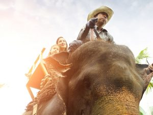 elephanttrekking7