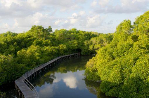 Mangrove Forest Bali Canoe Eco Tour (2)