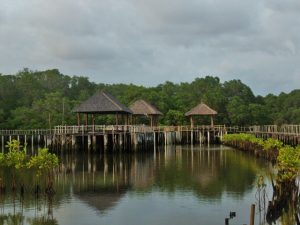 Mangrove Forest Bali Canoe Eco Tour (3)