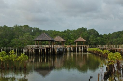 Mangrove Forest Bali Canoe Eco Tour (3)