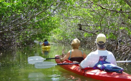 Mangrove Forest Bali Canoe Eco Tour (5)
