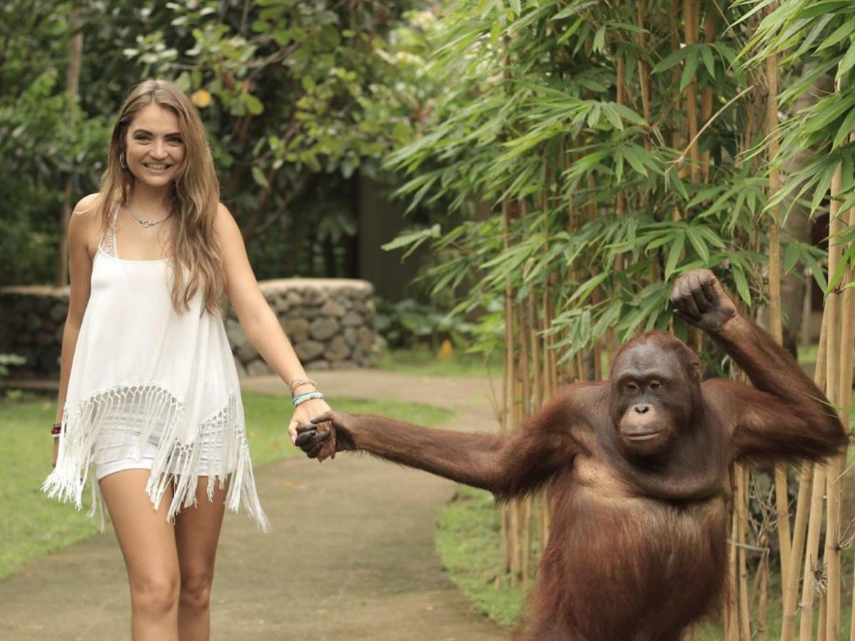 with orangutans