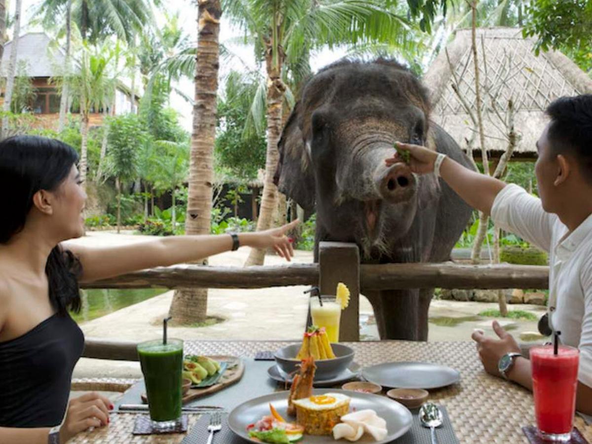 elephant breakfast lombok