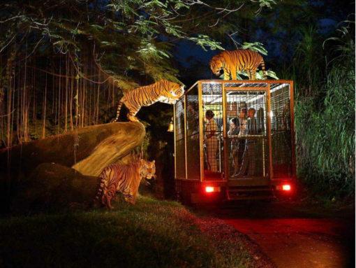 Bali Safari And Marine Park Night Safari Admission With Private Transfer