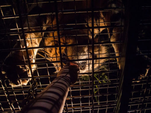 Night Safari at BSMP - Source: Wandernesia