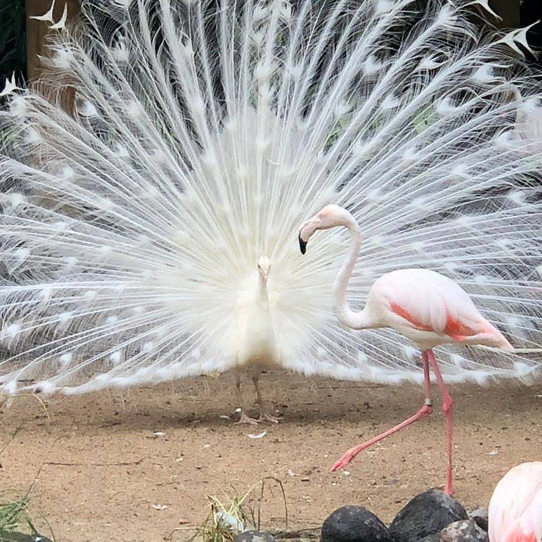 Places to See in Bali; Bali Bird Park
