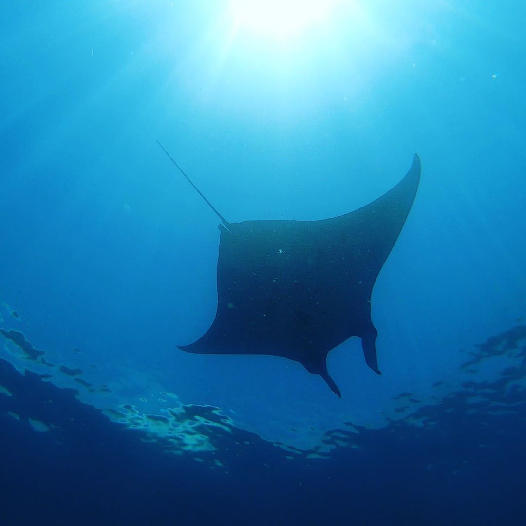 things to do in Labuan Bajo; Manta Ray @celiarun