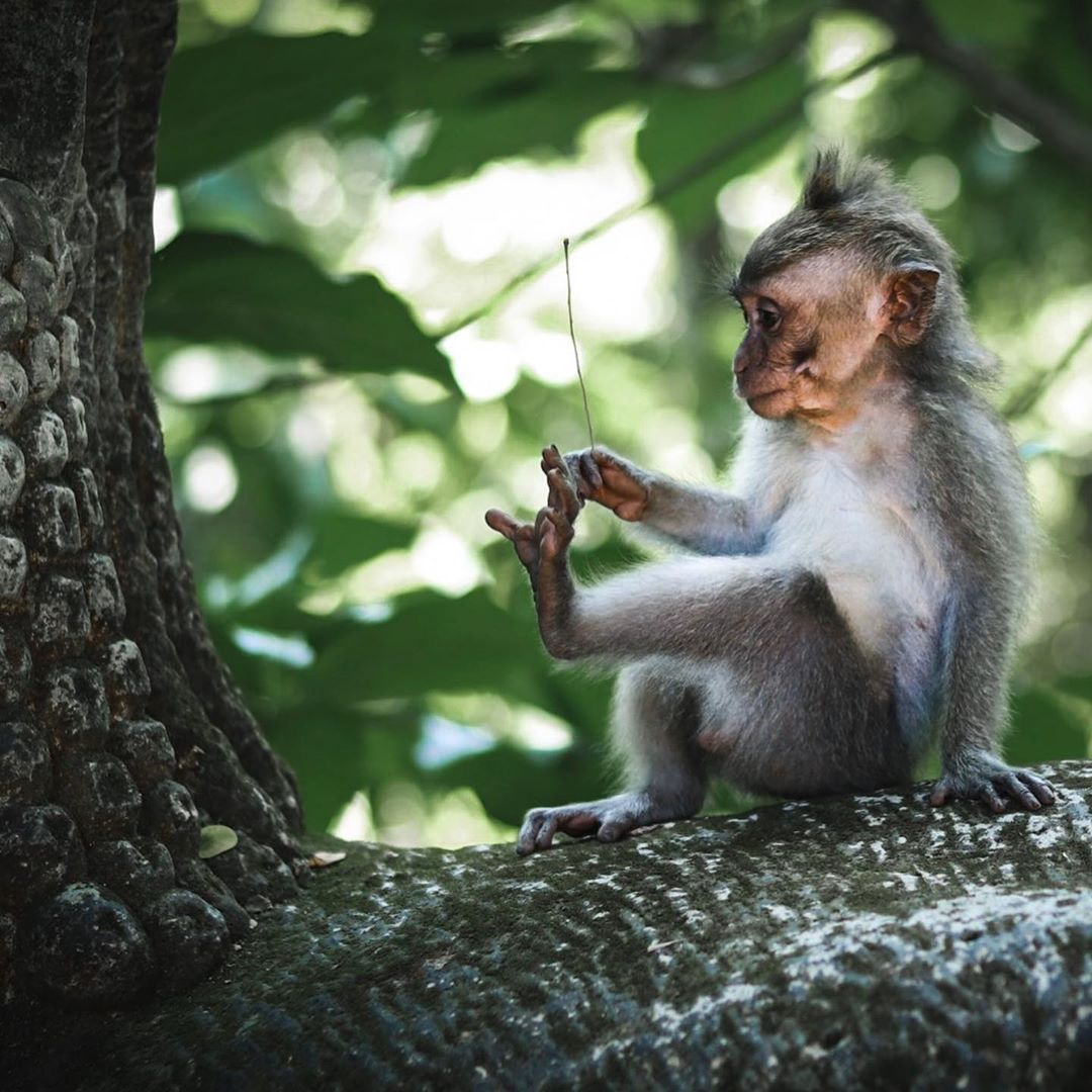 Places to See in Bali; Monkey Forest