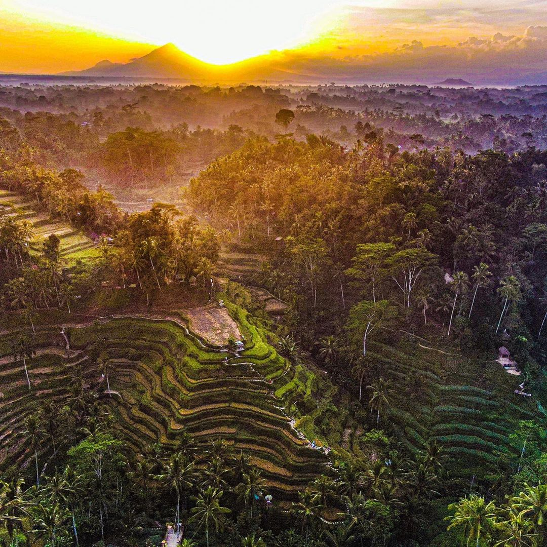 Places to See in Bali; Tegalalang Rice Terraces