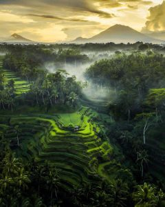 Activities in Bali; Tegalalang Rice Terraces