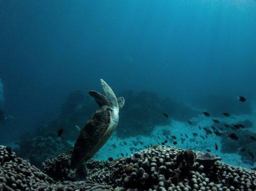Komodo Island Diving: sebayur island by @rog_freedive