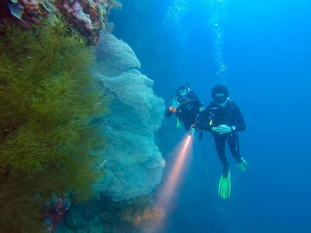 Menjangan Diving - IG @lookatmyright