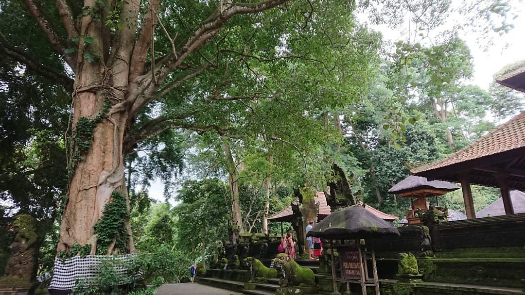 Bali Temple: Pura Dalem Agung by @evergreen.laguna