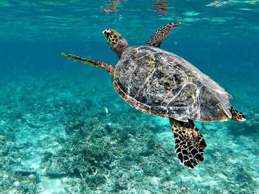 snorkeling in gili