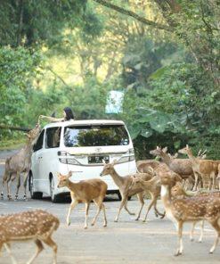 Bogor Safari