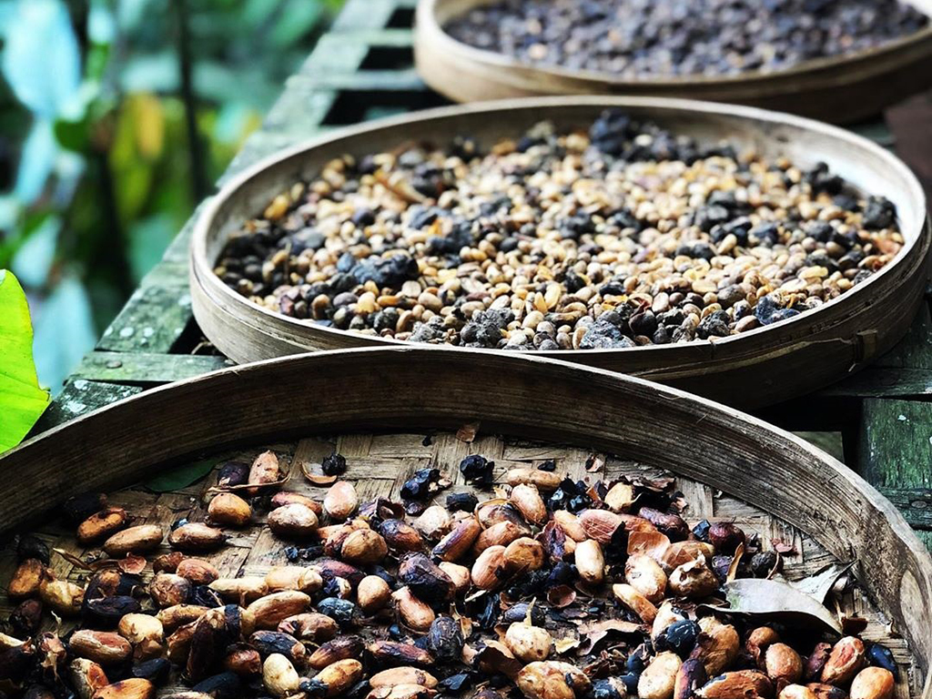 bali luwak kaffeeplantage